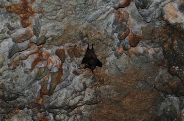Wildlife Bat by Mehoaido