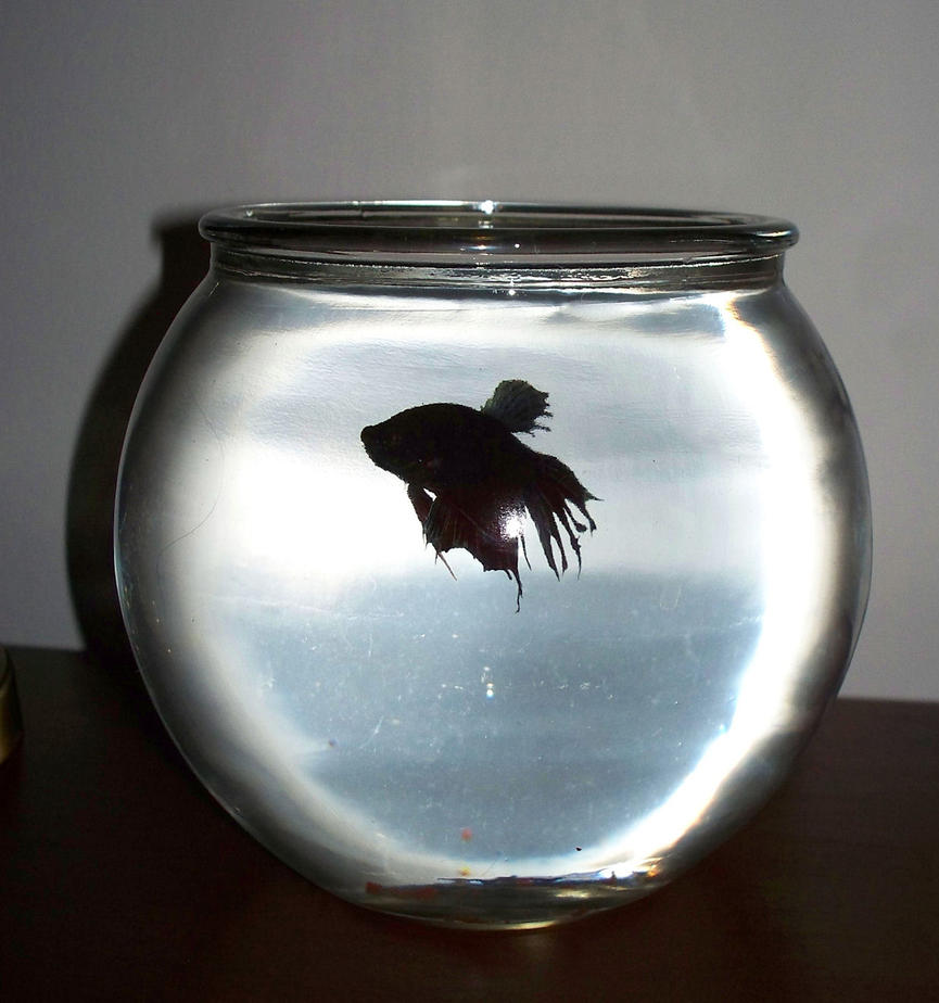 Big Fish In A Small Bowl By Solesearcher On Deviantart