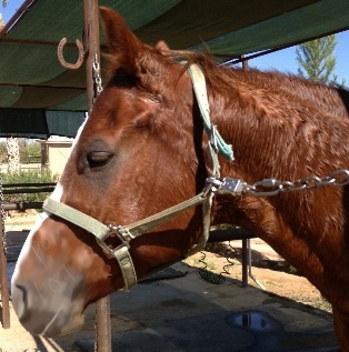 Quarter horse love by popmaster101
