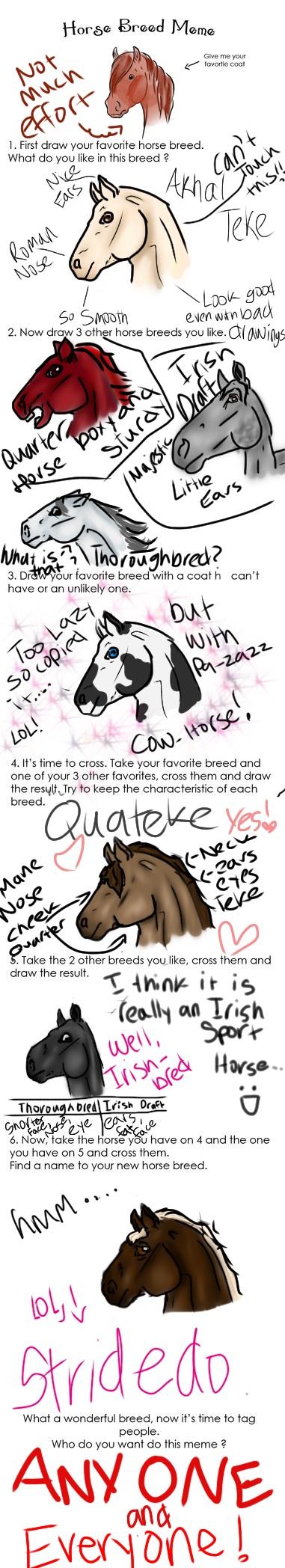Horse meme by popmaster101