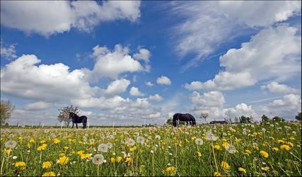 Dreamfields in Holland