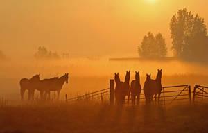 Horse Whispering.......