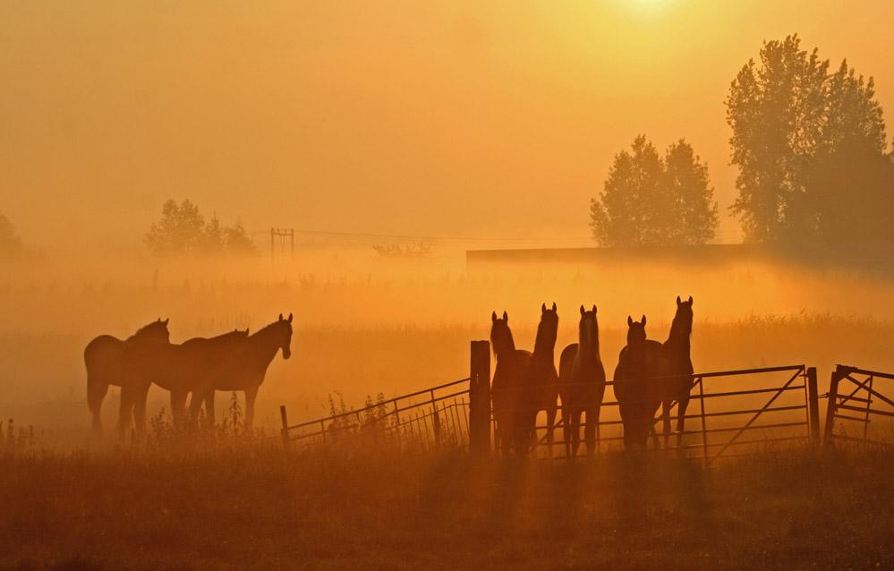 Horse Whispering....... by Betuwefotograaf