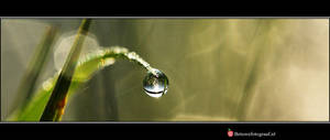 Pearls of Nature....V