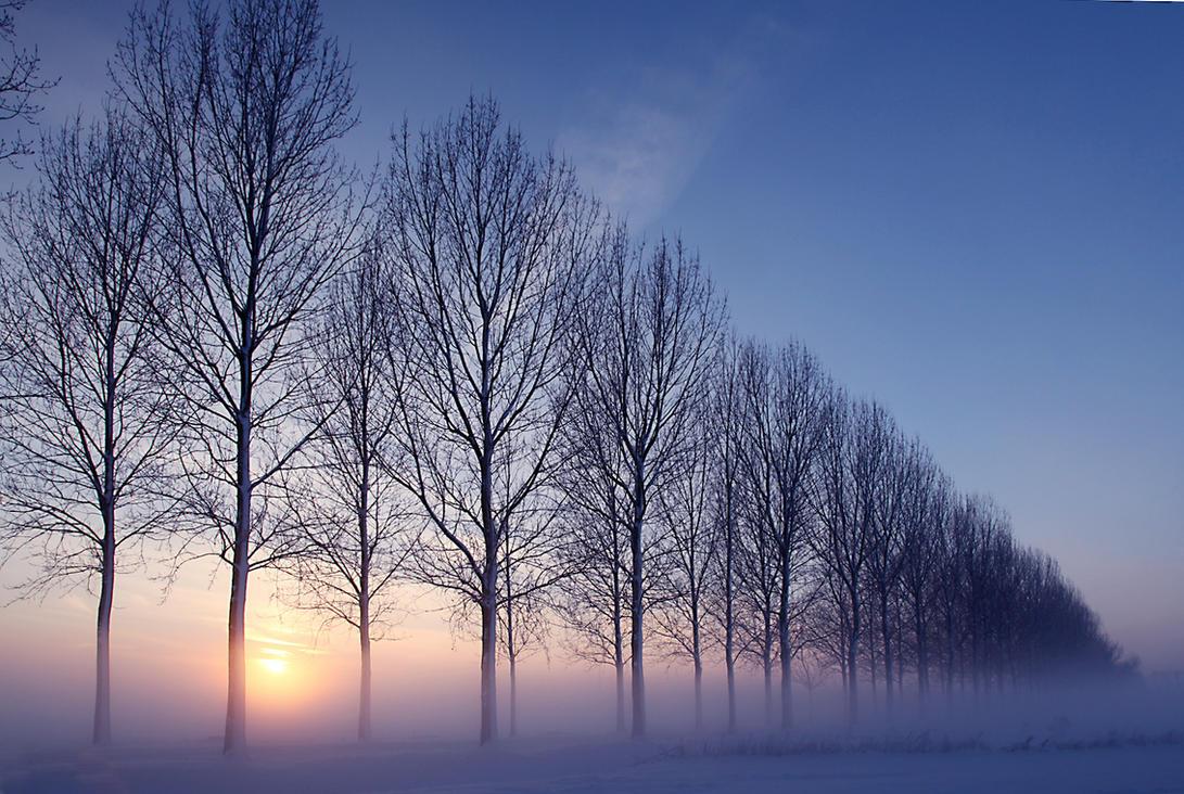 Winterwonderland  XXX by Betuwefotograaf