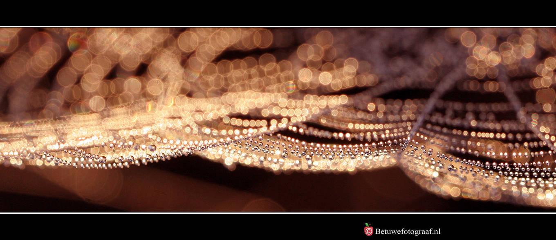 Jewels of Nature by Betuwefotograaf