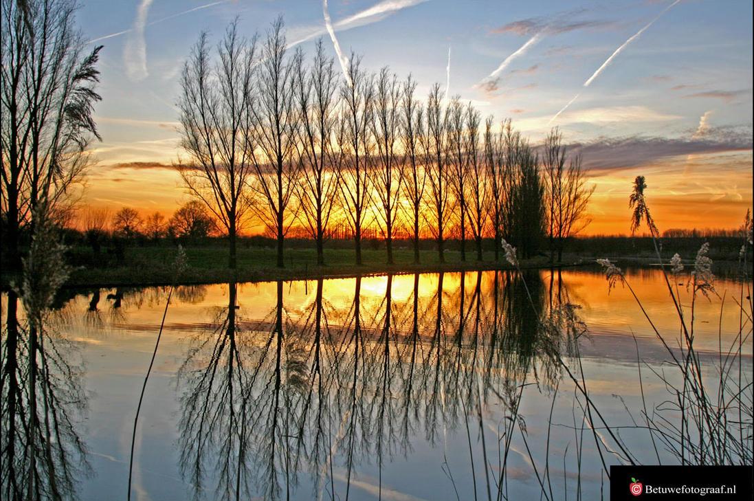Golden Reflection by Betuwefotograaf