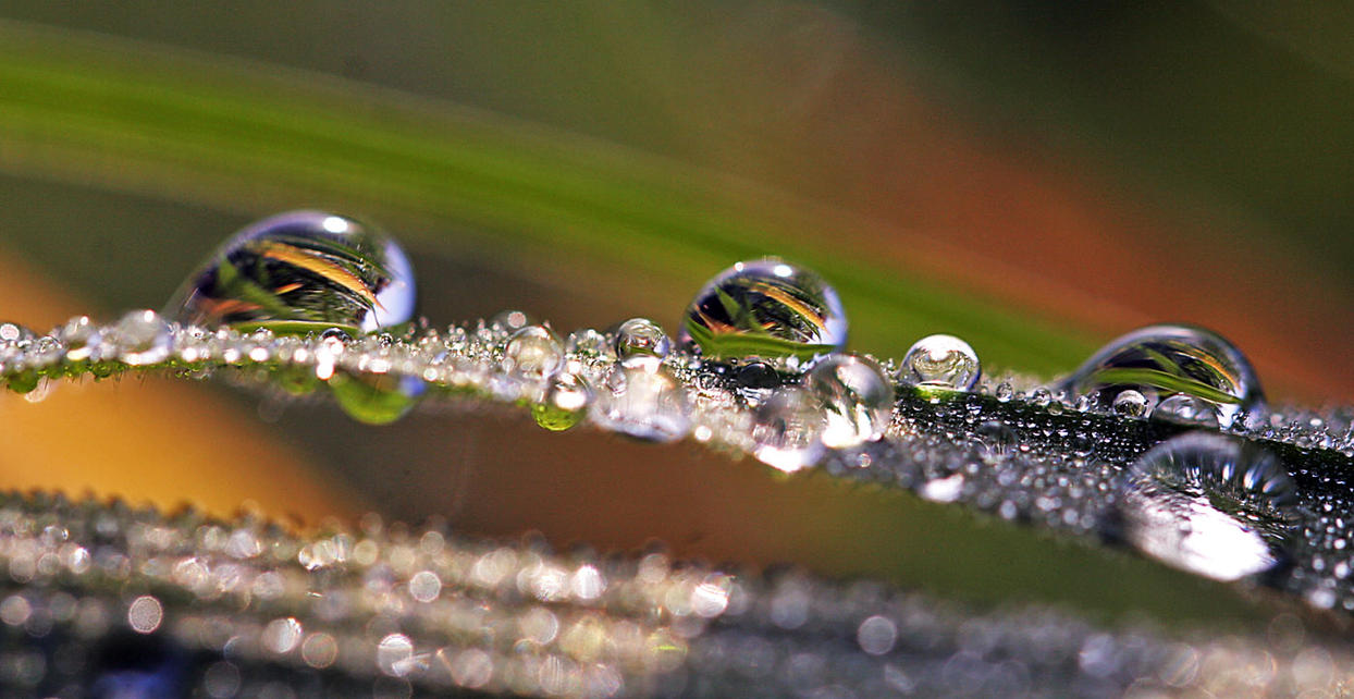 Pearls of Nature xxxx by Betuwefotograaf