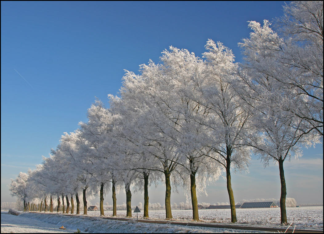 Winterwonderland in Holland by Betuwefotograaf