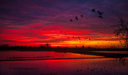 Bloodred was the sky this morning................ by Betuwefotograaf