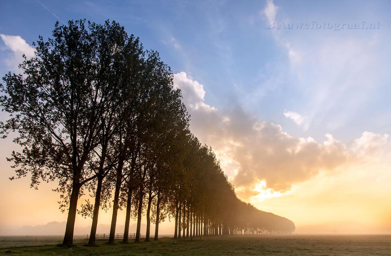 Trees in the mist  V by Betuwefotograaf