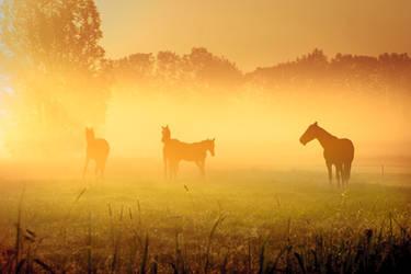 Horses in the mist  IIV by Betuwefotograaf