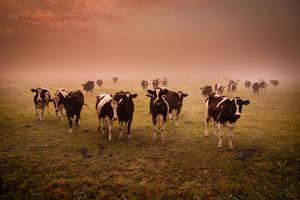 Hollands Glorie.... by Betuwefotograaf