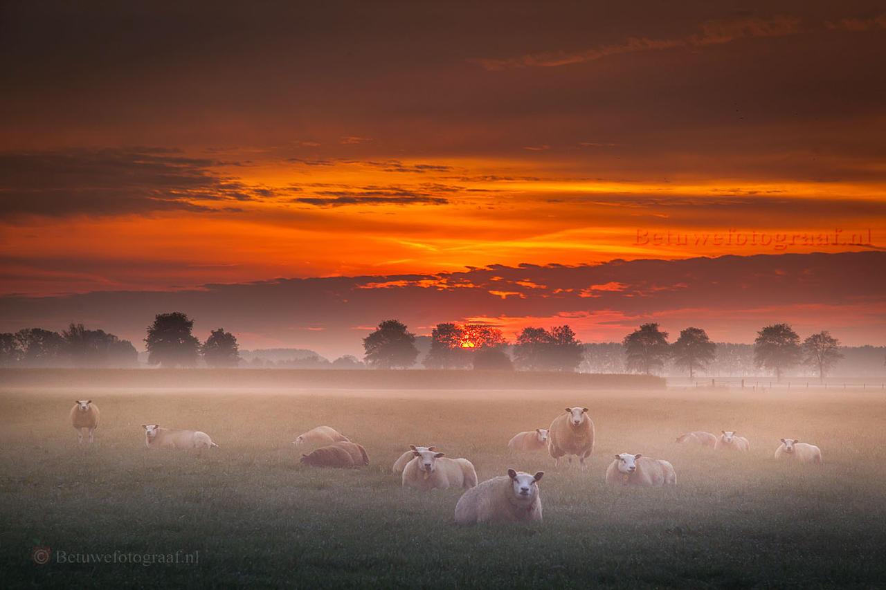 Foggy Sheeps........... by Betuwefotograaf