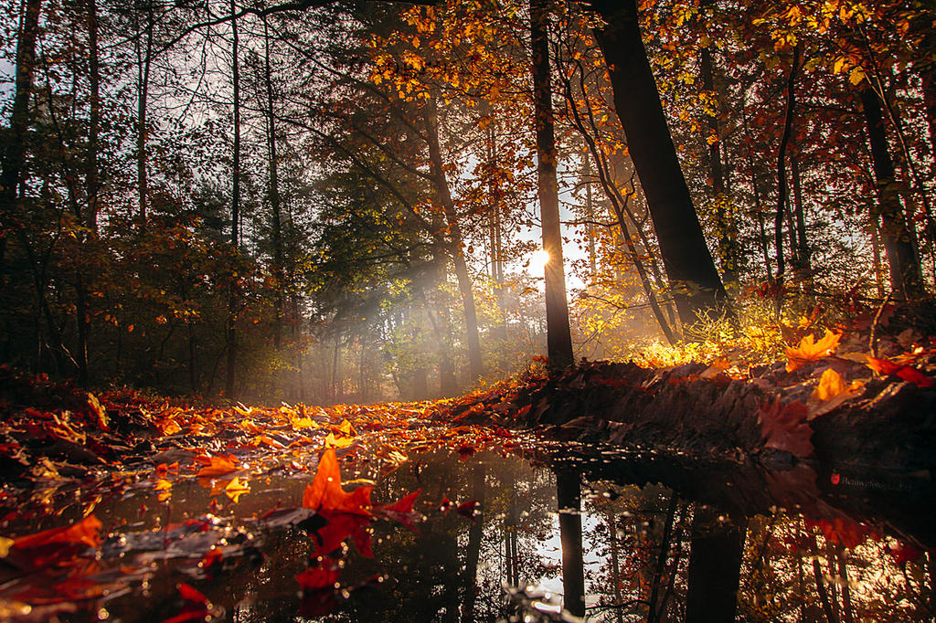 Autumn in Holland now.......... by Betuwefotograaf