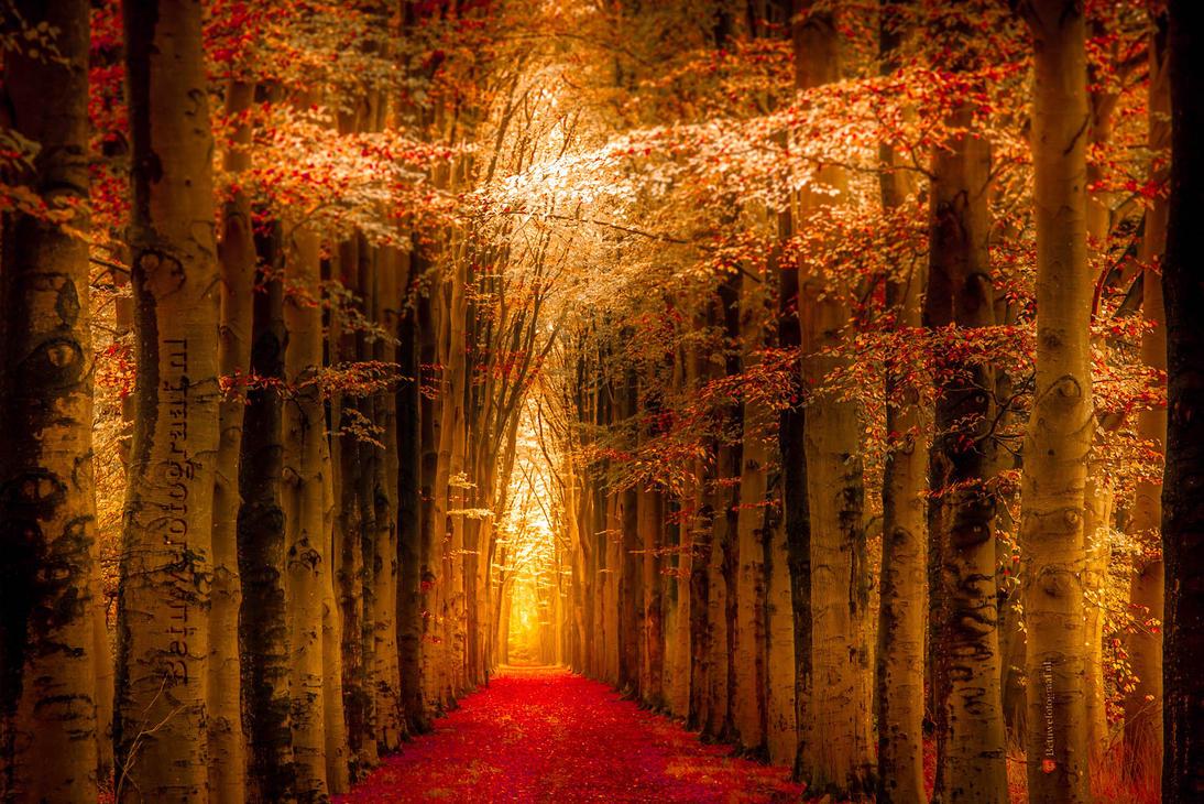 Path of dreams by Betuwefotograaf