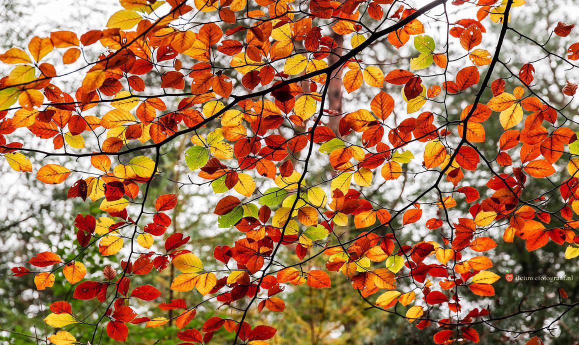 Autumn Leaves.... by Betuwefotograaf