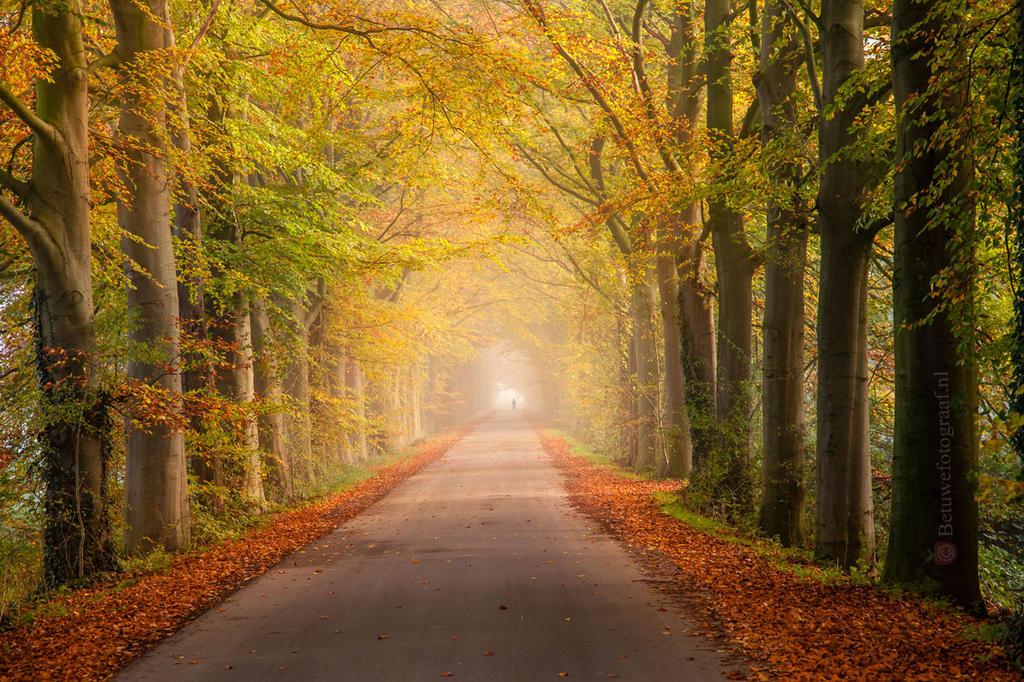 Walking into Wonderland.......... by Betuwefotograaf