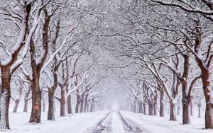 Winter Wonderlandland in holland now.......... by Betuwefotograaf