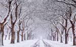 Winter Wonderlandland in holland now..........