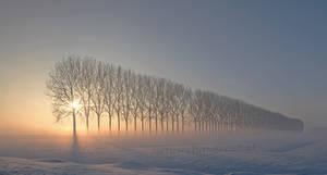 Dreamscape in Holland