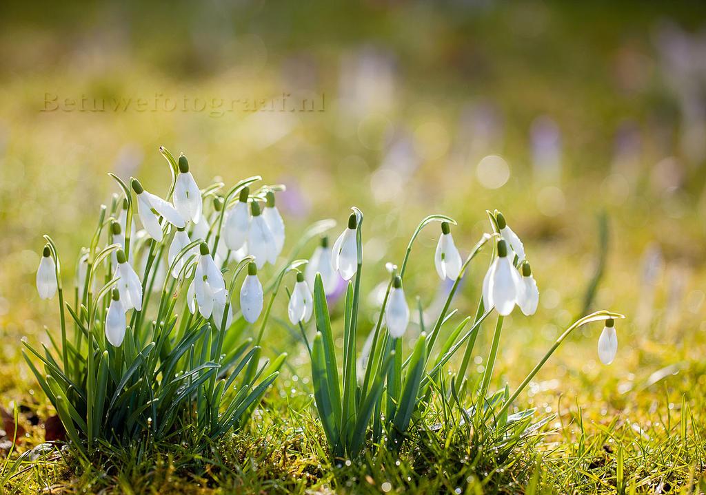 The magic of Spring........ by Betuwefotograaf