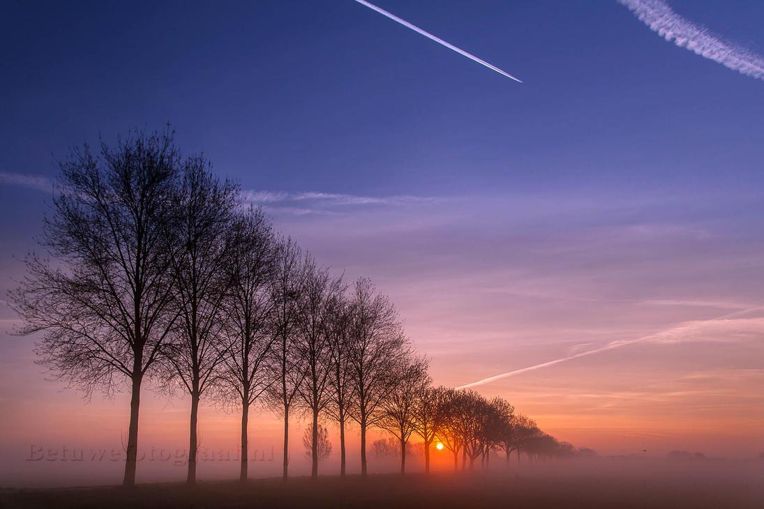 Foggy trees in a row.... by Betuwefotograaf