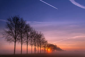 Foggy trees in a row.... by Betuwefotograaf