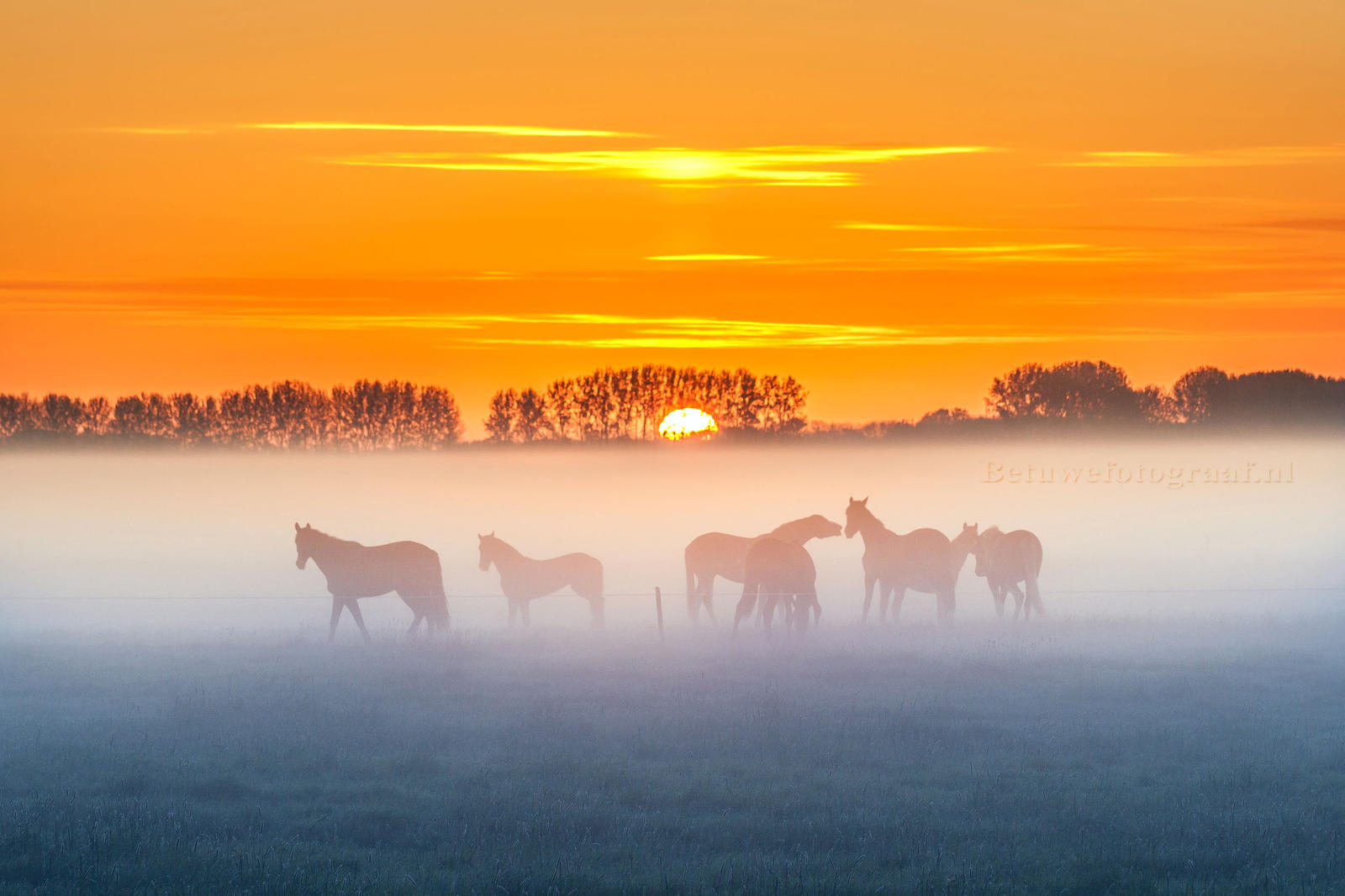 Horses in the mist by Betuwefotograaf