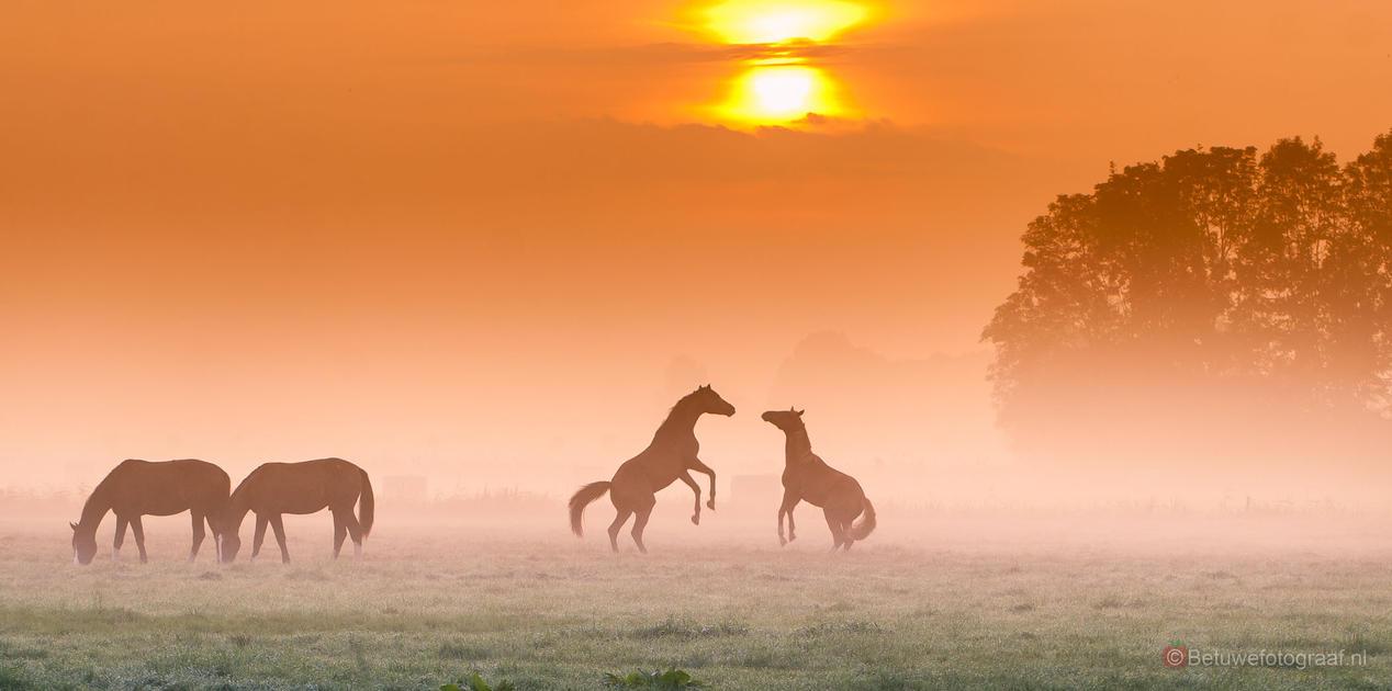 'The Horses' Dance' by Betuwefotograaf