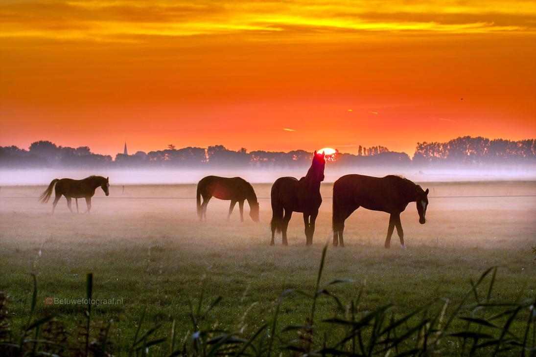 Equine Mist by Betuwefotograaf