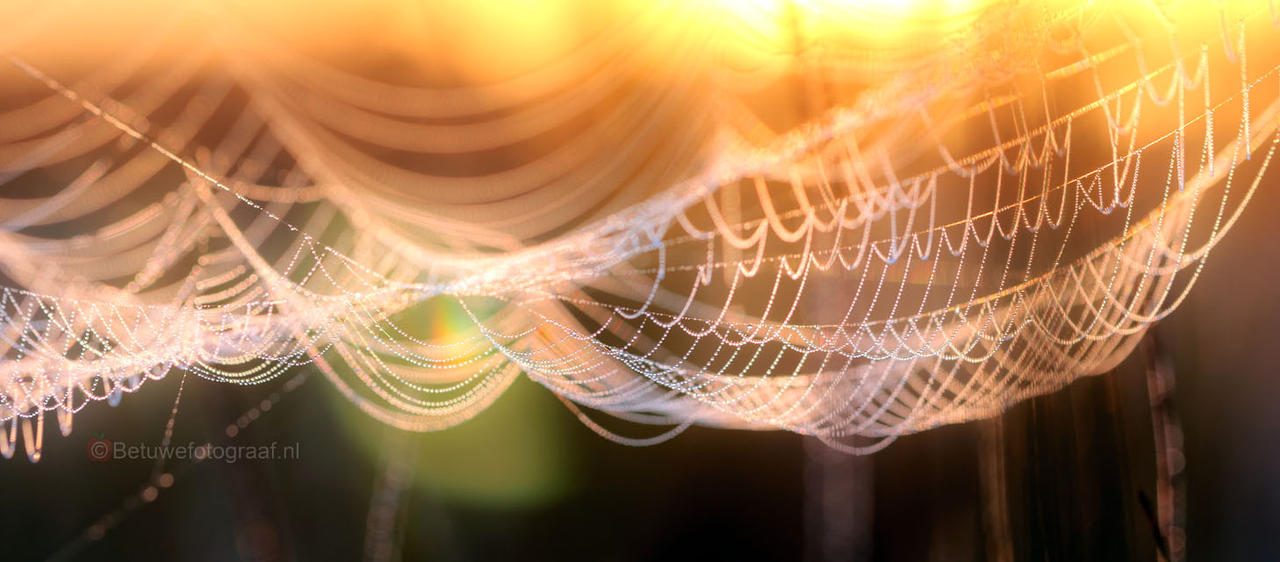 Jewels of Nature....VV by Betuwefotograaf