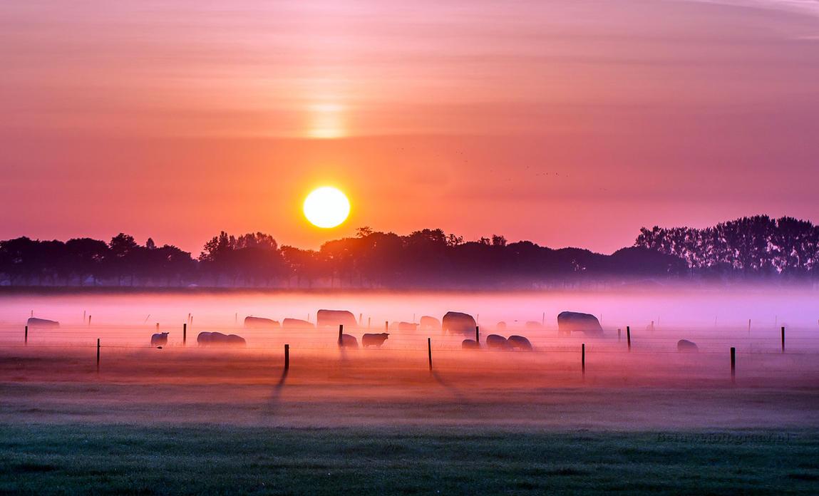 Dutch Dawn by Betuwefotograaf