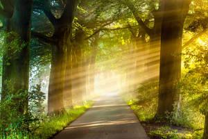 Path to my Dreams by Betuwefotograaf