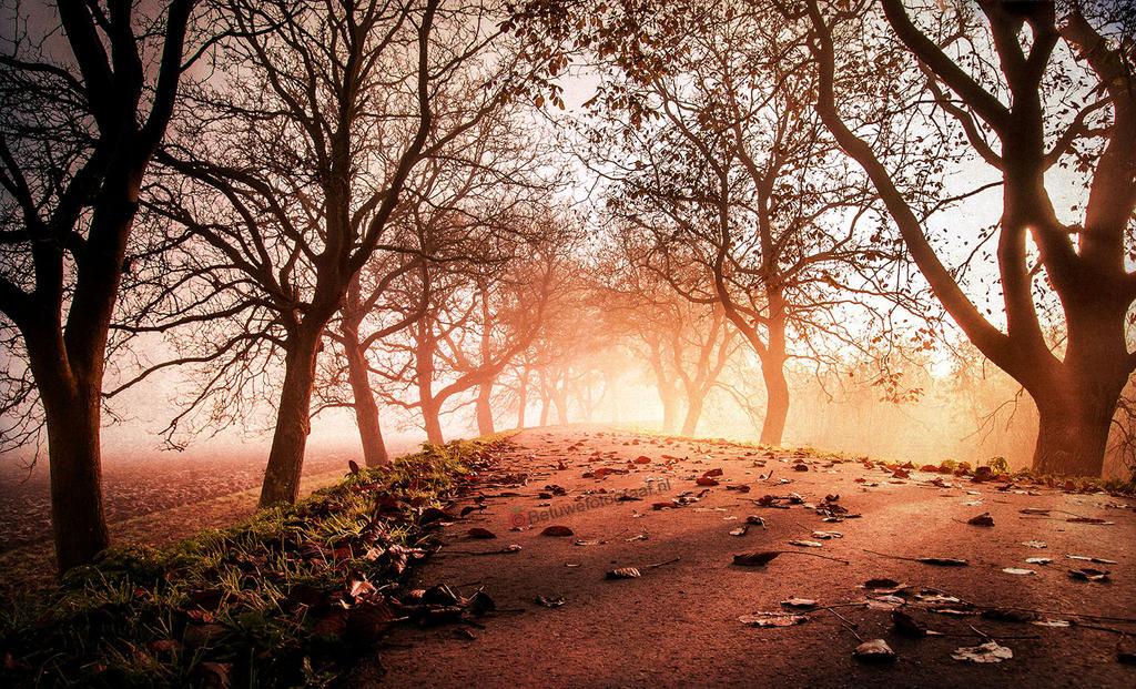 Autumn Leaves....... by Betuwefotograaf