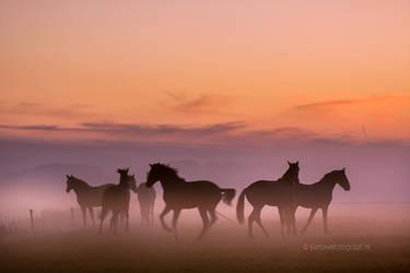 Dancing Horses....... by Betuwefotograaf