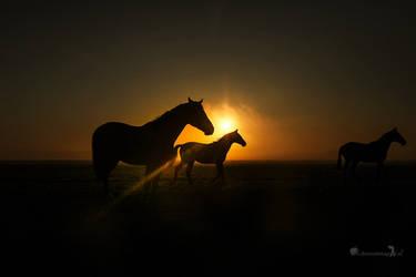 Goodmorning Sunshine ( Black Beauty's ) by Betuwefotograaf
