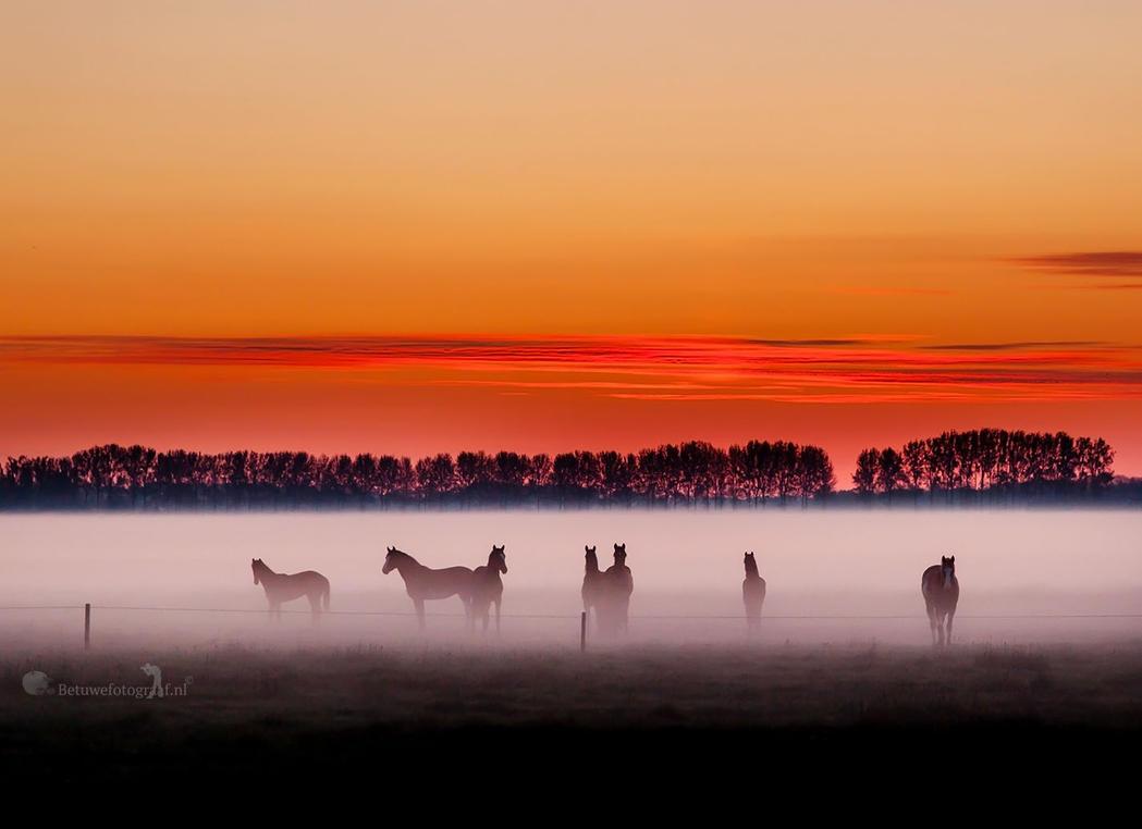 Horses in the Mist by Betuwefotograaf