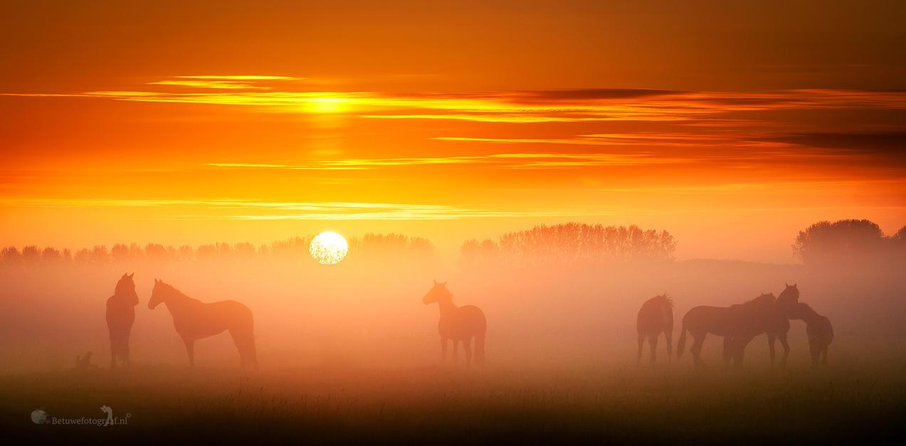 Silhouttes in the Mist by Betuwefotograaf