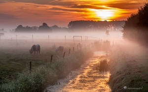 Give me a title.......? by Betuwefotograaf