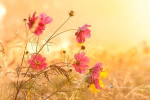 Field bouquet after the sunrise........... by Betuwefotograaf