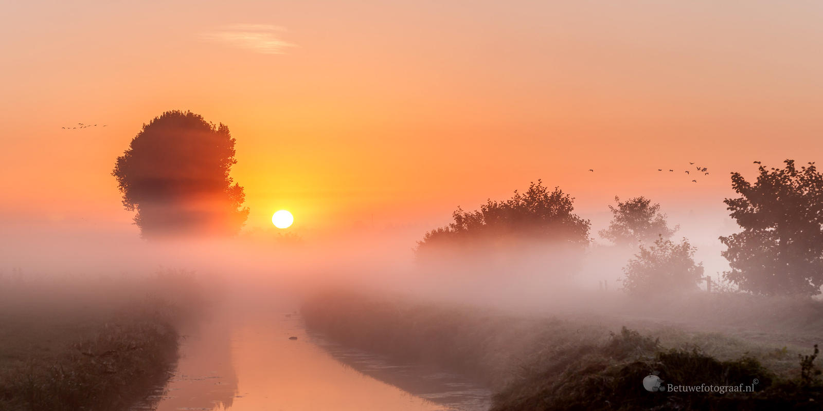 give me a title...........? by Betuwefotograaf