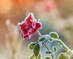 Frozen Beauty.....I
