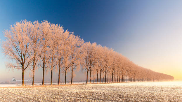 Winterwonderlandschap in Holland