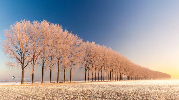 Winterwonderlandschap in Holland by Betuwefotograaf