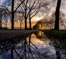 Reflective Symmetr