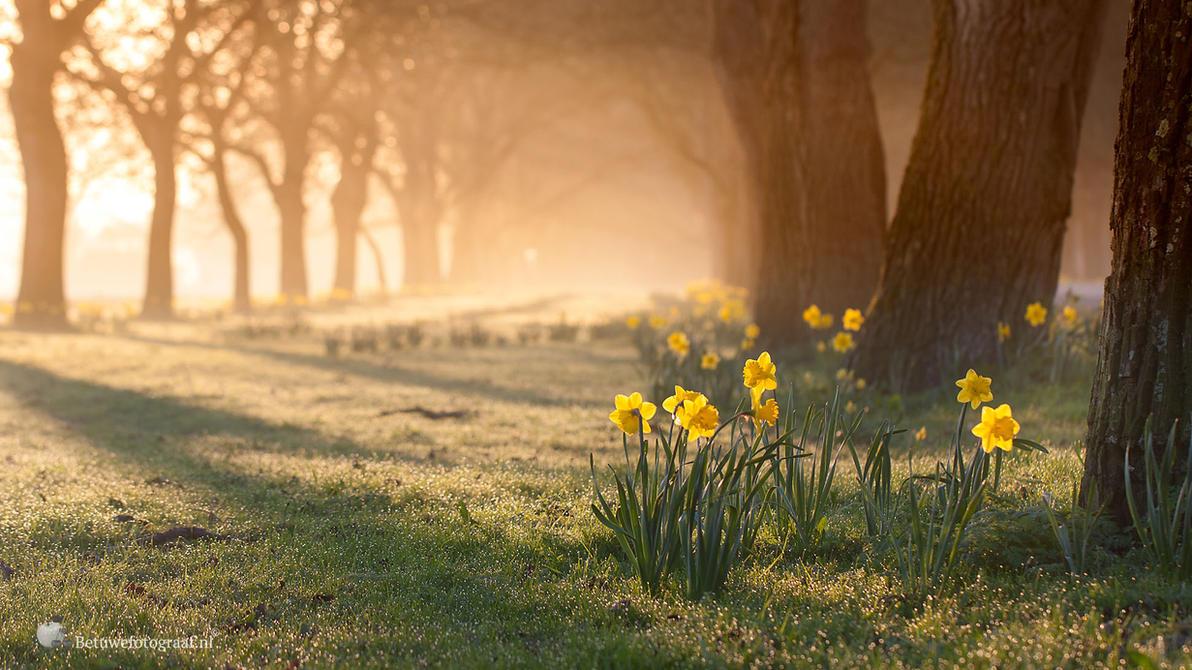 Shine a light on me .......? by Betuwefotograaf