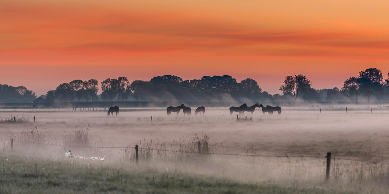 They Don't Shoot Horses Don't They...... by Betuwefotograaf