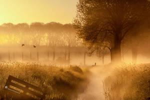 Breath of Old Seeds by Betuwefotograaf