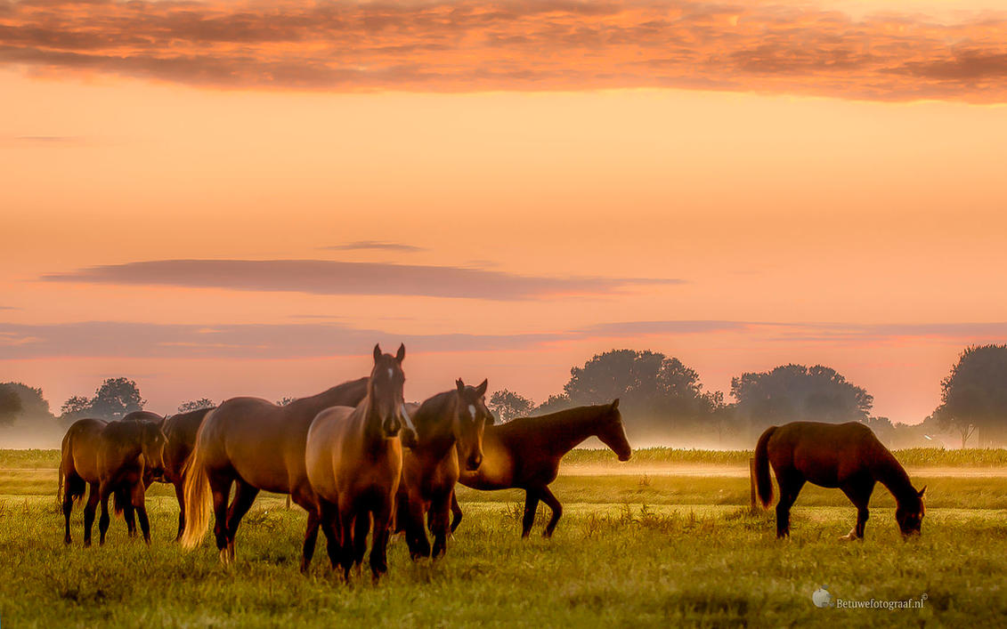 A  MEADOWS FOR FREEDOM by Betuwefotograaf
